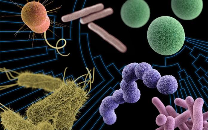 Cơ chế chung của sản xuất enzyme từ vi sinh vật gồm các giai đoạn sau: Tuyển chọn và cải tạo giống vi sinh vật cho enzyme có hoạt lực cao