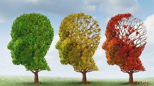 Những người lớn tuổi không hấp thụ đủ hàm lượng vitamin D có nguy cơ mắc chứng đãng trí và bệnh Alzheimer, chứng mất trí phố biển nhất