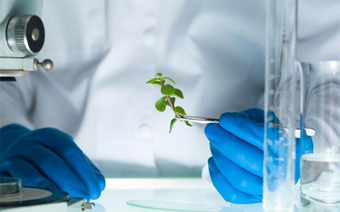 Là sinh viên ngành Công nghệ sinh học, đam mê nghiên cứu khoa học, thích thử thách và đổi mới thì R&D là công việc bạn không thể bỏ qua