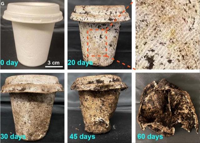 Giờ đây, hộp đựng có thể phân hủy tự nhiên trong vòng 60 ngày và giá cả phải chăng hơn nhựa có thể phân hủy vì nó được làm từ bã mía và tre
