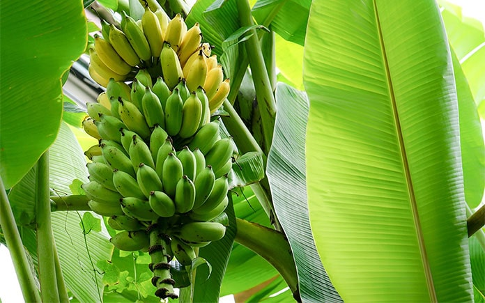 Để phòng ngừa tốt việc hóa chất có trong thực phẩm, bạn nên biết về hóa chất, cũng như ảnh hưởng của chúng trong thực phẩm ...