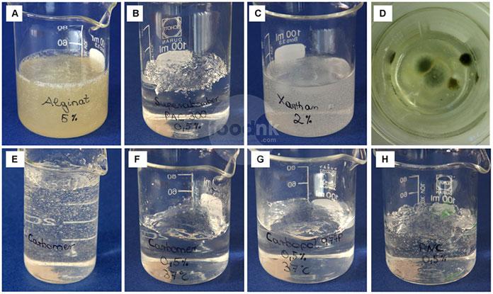 Xanthan gum là một polysaccharide ngoại bào được tổng hợp từ vi khuẩn Xanthomonas campestris. Nó được sử dụng như một phụ gia tạo gel