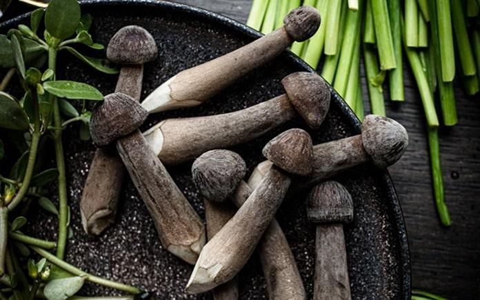 Nấm mối đen được xem là loại nấm rất tốt cho sức khỏe vì đạt giá trị dinh dưỡng cao, ngọt thanh tự nhiên. Nấm mối đen có nhiều đặc điểm...