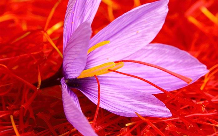 Saffron được xếp vào hàng những nguyên liệu có giá trị nhất thế giới, được biết 1kg saffron có giá lên đến 10.000 USD/kg (hơn 230 triệu đồng)