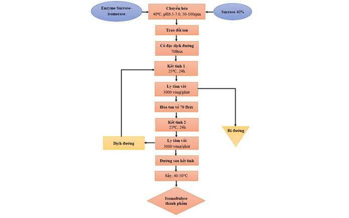 Sản xuất isomaltulose từ mía đường đang là một trong những sự quan tâm của mọi người. Hãy cũng Foodnk tìm hiểu nhé!