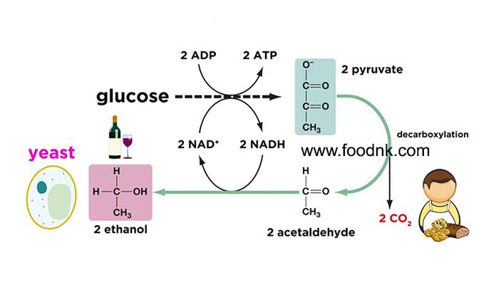 Ethanol là một hợp chất hữu cơ được ứng dụng khá nhiều trong đời sống sinh hoạt hằng ngày. Vậy Ethanol là gì? Quá trình lên men...