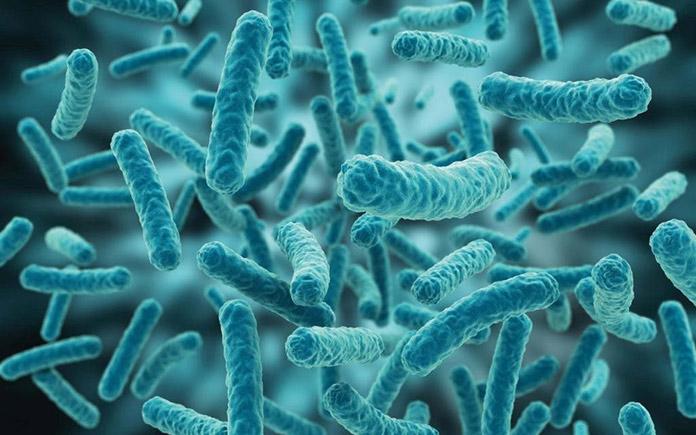 Hiện nay, có khoảng 20 loài vi khuẩn lên men acetic, chúng được gọi tên chung là vi khuẩn acetic. Chúng rất dễ tìm thấy trong không khí...