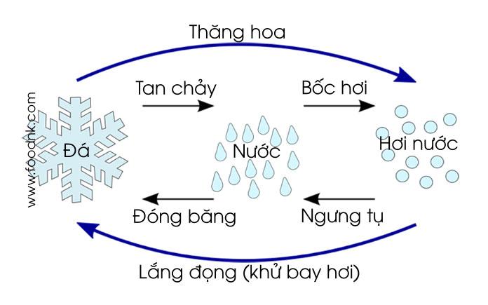 Sấy thăng hoa là quá trình thiết bị tách ẩm khỏi vật liệu sấy trực tiếp từ trạng thái rắn sang trạng thái hơi nhờ quá trình thăng hoa. Để tạo