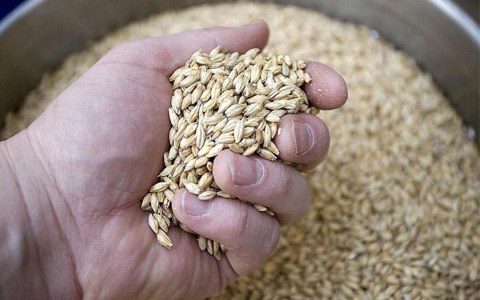 Có 4 loại nguyên liệu chính sử dụng trong sản xuất bia thủ công như : Mạch nha (Malt), nước, hoa bia (houblon) , men bia.