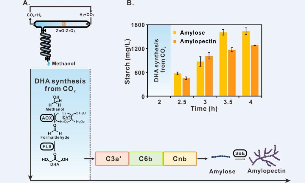 Các nhà khoa học từ Trung Quốc đã lần đầu tiên tạo ra tinh bột nhân tạo bằng cách sử dụng CO2, hydro và điện với đặc tính giống hệt tinh bột
